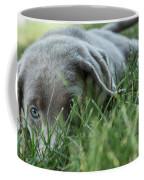 Silver Labrador Retriever  Coffee Mug
