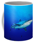 Silvertip Shark In Thailand Coffee Mug