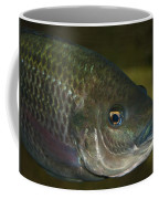 Single Fish Swimming Coffee Mug