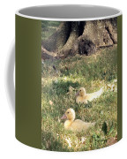 Sitting Ducks Coffee Mug