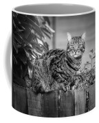 Sitting On The Fence Coffee Mug