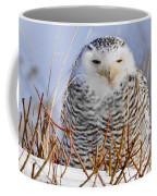 Sitting Snowy Owl Coffee Mug