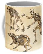 Skeletons Of Man, Ape, Bear, 1860 Coffee Mug
