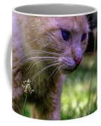 Skippy Feral Cat Portrait 0369b Coffee Mug