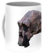 Skull Of Homo Erectus Coffee Mug