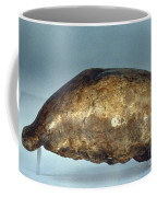 Skull Of Java Man Coffee Mug