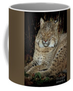 Sleepy Bobcat Coffee Mug