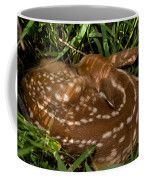Sleeping Fawn Coffee Mug