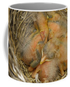 Sleeping Robins Coffee Mug