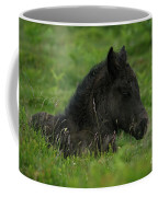 Sleepy Dartmoor Foal Coffee Mug