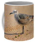 Sleepy Gull Coffee Mug