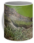 Sleepy Papa Gator Coffee Mug