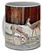 Slender-horned Gazelles In Living Desert Zoo And Gardens In Palm Desert-california Coffee Mug