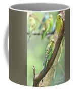 Small Budgie Birds With Beautiful Colored Feathers Coffee Mug