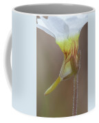 Small Butterwort Coffee Mug