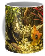 Small Fish In An Aquarium Coffee Mug