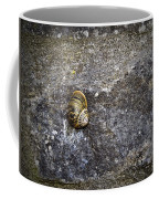 Snail At Ballybeg Priory County Cork Ireland Coffee Mug