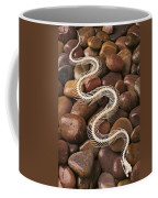 Snake Skeleton  Coffee Mug by Garry Gay