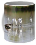 Snowy Egrets On Calm Water Coffee Mug