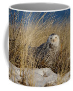 Snowy Owls On The Beach Coffee Mug
