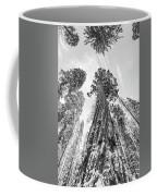 Snowy Sequoias At Calaveras Big Tree State Park Black And White 6 Coffee Mug