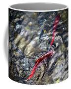 Sockeye Salmon, Alaska, August 2015 Coffee Mug