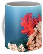 Soft Coral  Coffee Mug