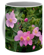 Soft Light On Nookta Rose Rosa Nutkana Coffee Mug by Ralph Lee Hopkins