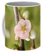 Pink Quince Blossom Coffee Mug