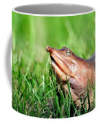 Soft Shell Turtle  Coffee Mug