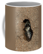 Solitary Bee  Andrena Cinearia Coffee Mug
