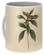 Sonerila Margaritacea Coffee Mug