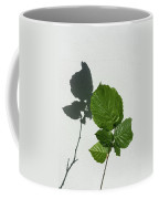 Sophisticated Shadows - Glossy Hazelnut Leaves On White Stucco - Vertical View Upwards Left Coffee Mug