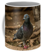 South American Pigeon  Coffee Mug