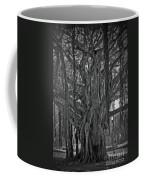 Spanish Moss Of The Tree Coffee Mug