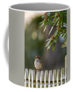 Sparrow In Colonial Williamsburg Coffee Mug