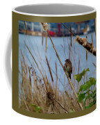 Sparrow On The Cattails Coffee Mug