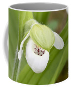 Sparrow's-egg Orchid  Coffee Mug