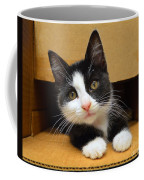 Special Delivery Tuxedo Kitten Coffee Mug
