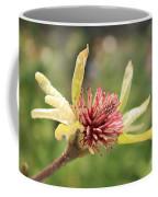 Spent Tulip Tree Blossom Coffee Mug