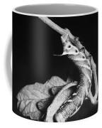 Sphinx Moth Coffee Mug