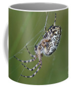 Spider Coffee Mug