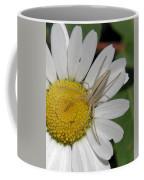 Spider On Daisy Coffee Mug