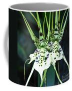 Spider Orchid Brassia Coffee Mug
