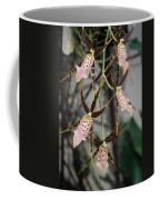 Spider Orchids Coffee Mug