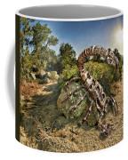 Spider Sun Coffee Mug