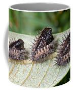 Spiky Beetle Cases Coffee Mug