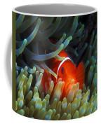 Spinecheek Anemonefish, Great Barrier Reef Coffee Mug