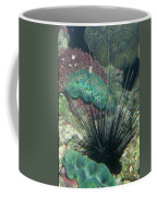 Spiny Coffee Mug