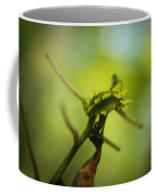 Spiny Oak Slug Moth 2 Coffee Mug